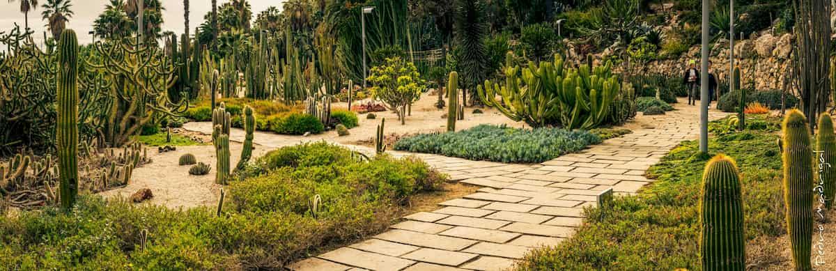 jardin-con-cactus