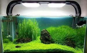 acuario-con-plantas