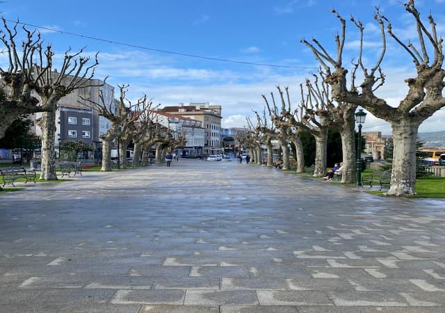 jardinería-forestal-marin-pontevedra