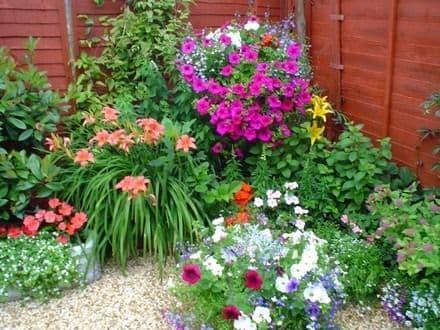 como-plantar-flores-en-el-jardin