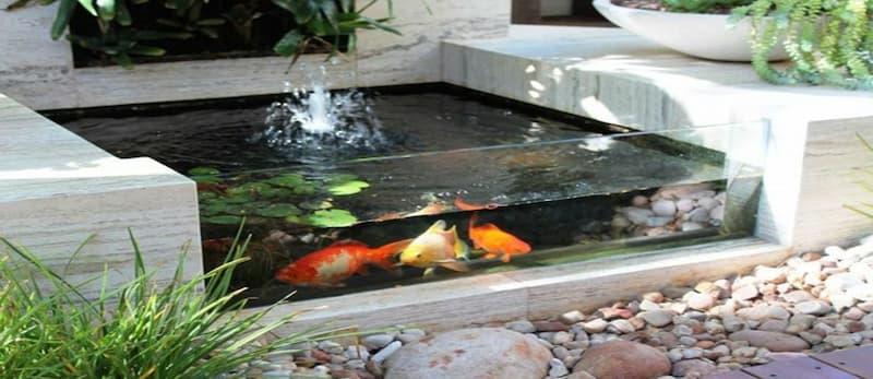 estanque-de-interior
