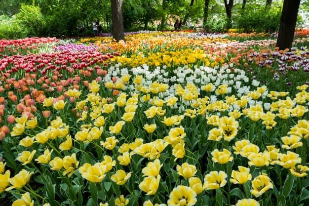 mantenimiento-de-jardines-flores-de-colores