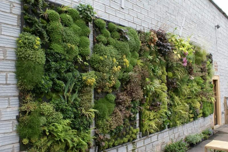 jardin-vertica-en-pared-de-piedra