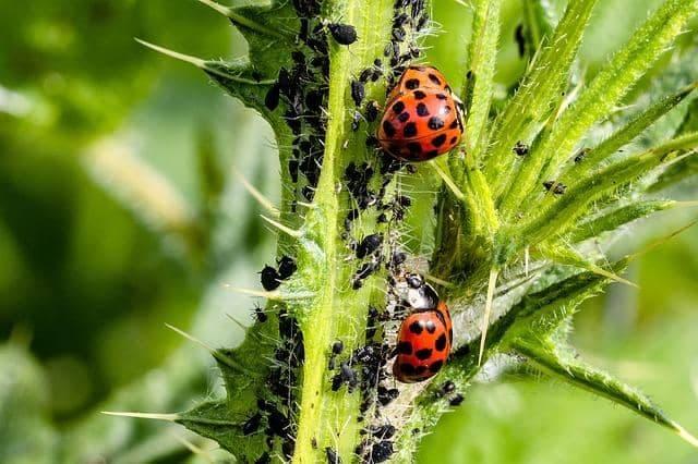 plagas-y-enfermedades-de-las-plantas
