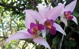 orquidea-bosque